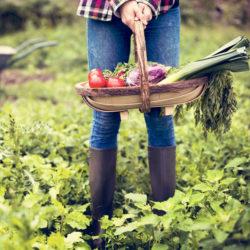 Gemüse Anbau